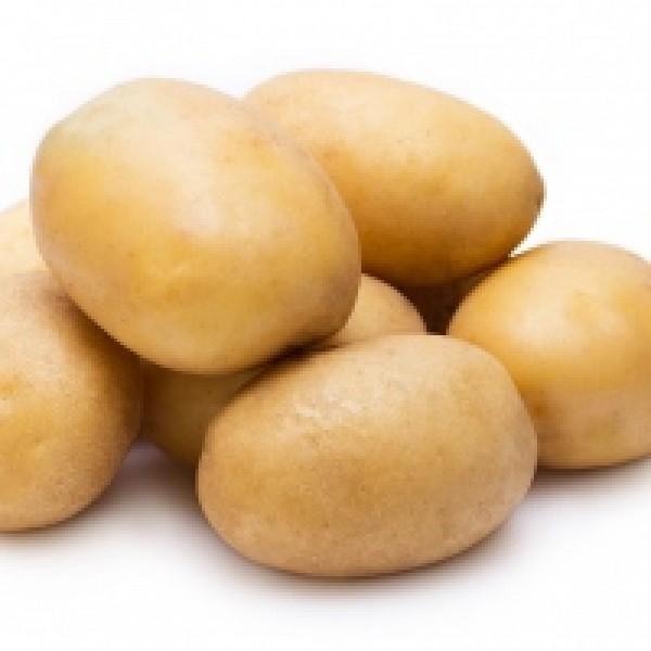 Ziemniaki Tajfun od p. Adamczyka