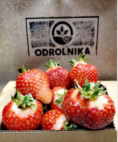 Truskawki ekologiczne 1 kg (dostawa w środę wyłącznie do Krakowa, Tarnowa lub odbiór osobisty)