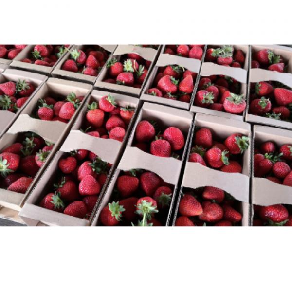 Truskawki ekologiczne 2 kg (dostawa we wtorek wyłącznie do Krakowa, Tarnowa lub odbiór osobisty)
