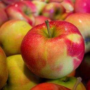 Jabłka eko Tomasz Obszański
