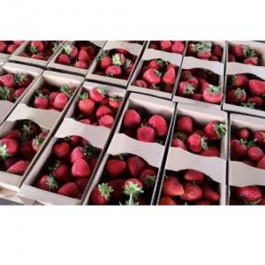 Truskawki ekologiczne 1 kg (dostawa we wtorek wyłącznie do Krakowa, Tarnowa lub odbiór osobisty)